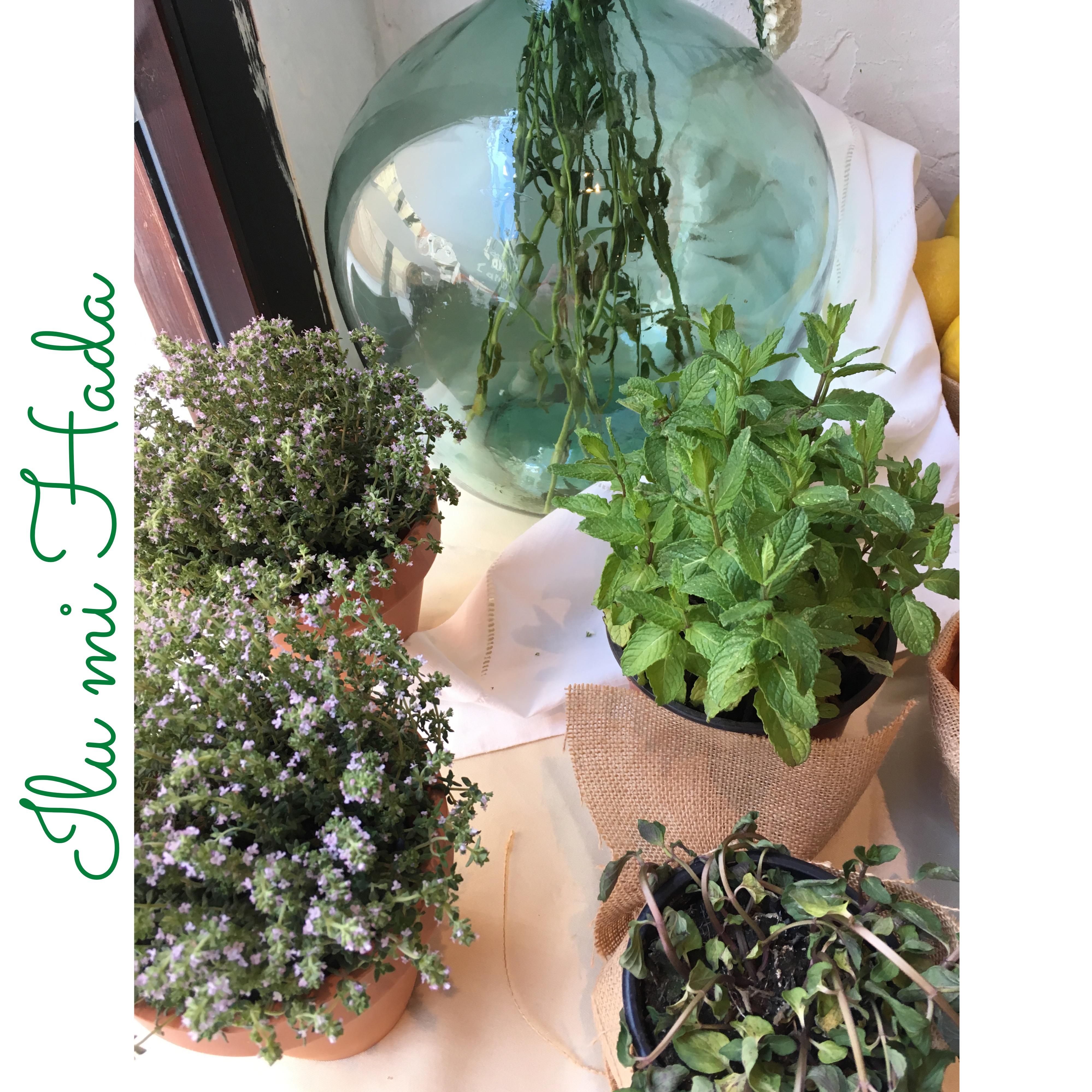 23. Plantas aromáticas