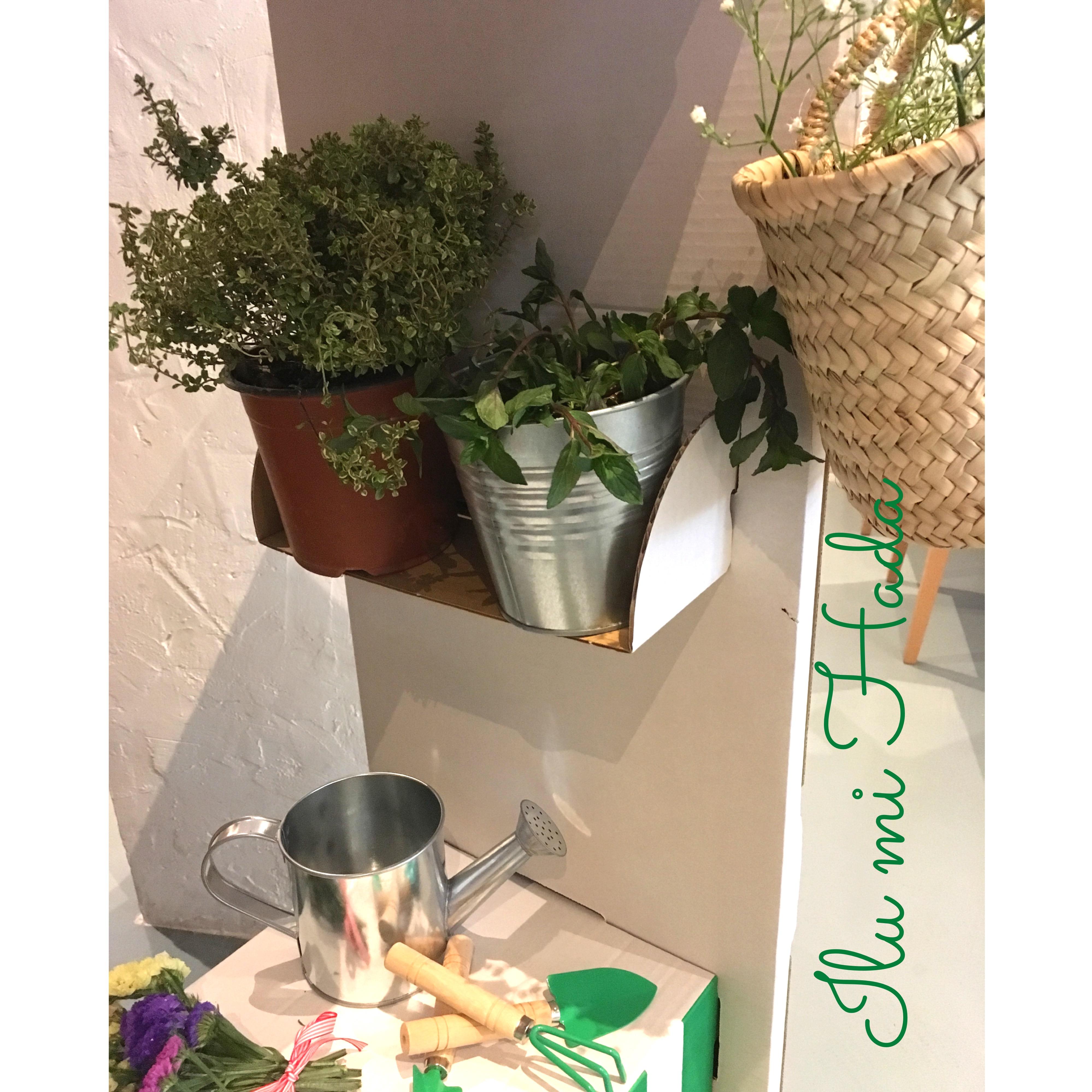 7. Estante de plantas